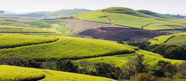 Visit Valley of a Thousand Hills, an Exciting Component of Durban, South Africa